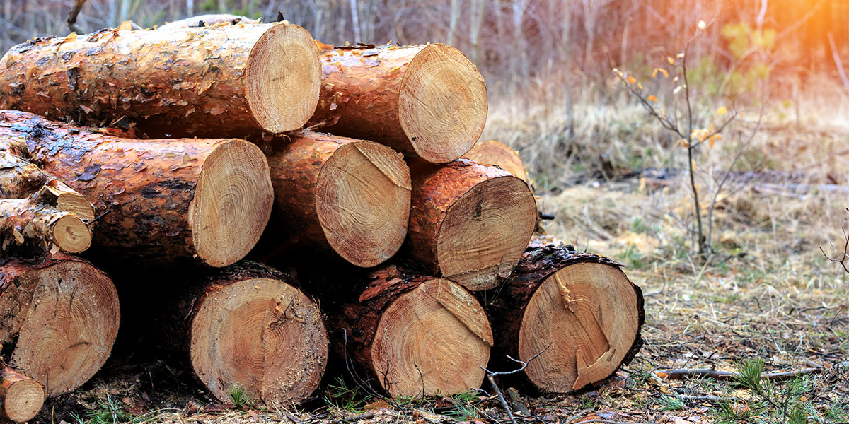 Market Category Page - Forestry